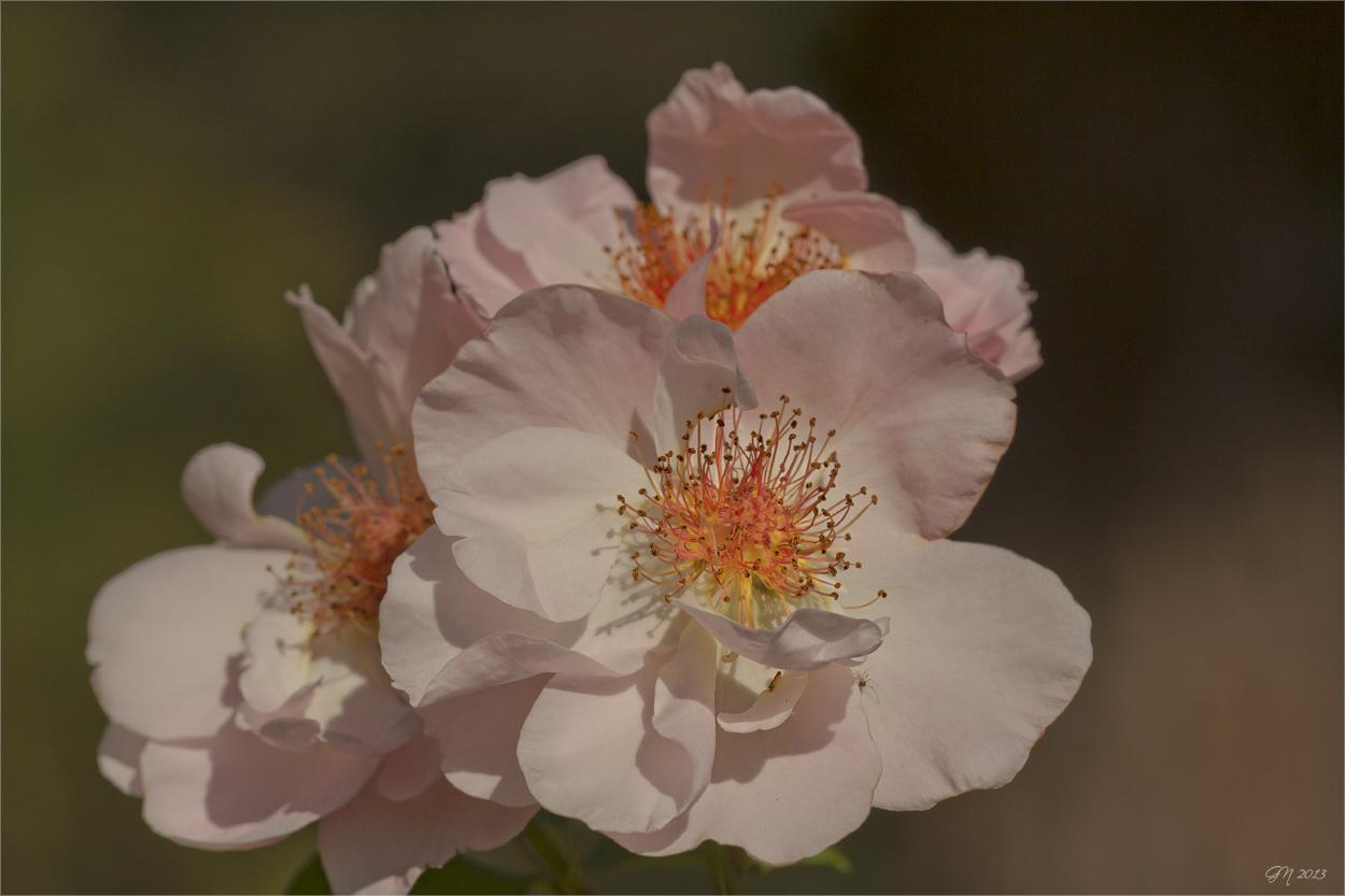 Ein Rückblick auf's Rosenjahr ( 2 )