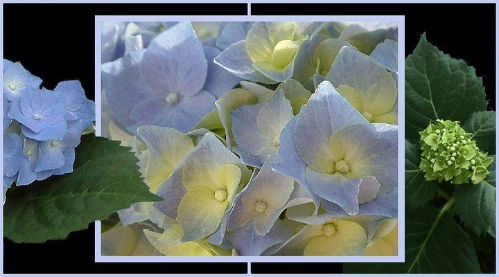 ..ein rührend Blaues sich vor Grünem freuen