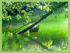 ein ruhiger Ort in unserer Pfalz ( Isernachweiher)