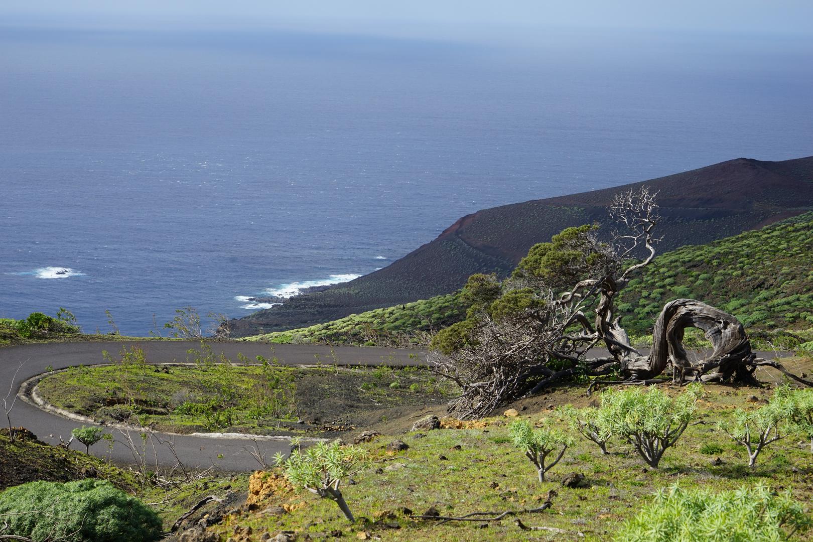 Ein Sabinar in der einsamen Landschaft im Westen von El Hierro