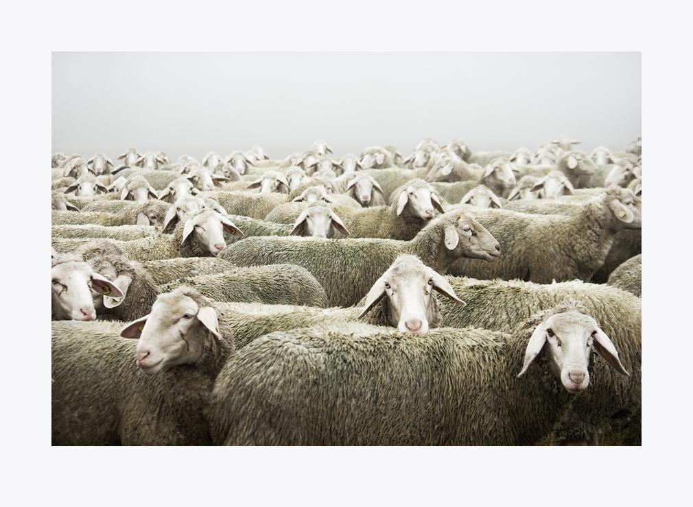 ... ein Schaf sein II