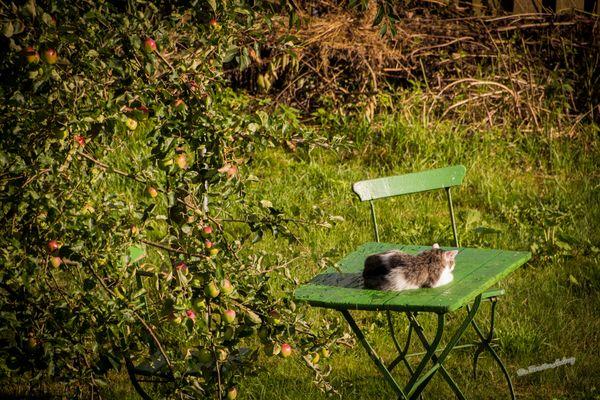 Ein Schläfchen im Garten