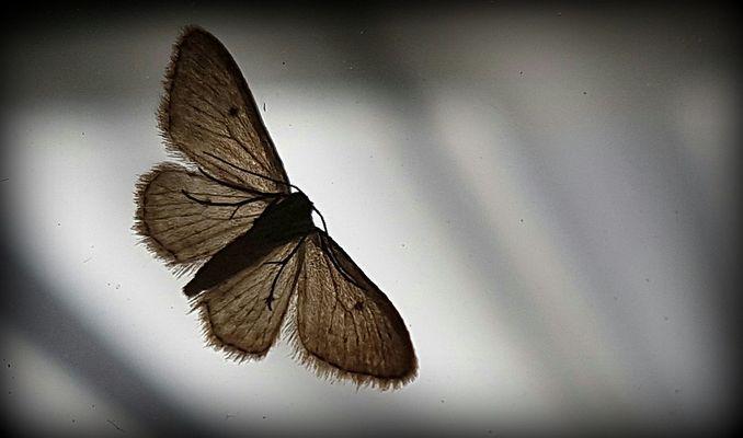 Ein Schmetterling......
