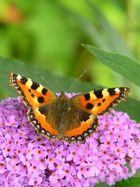 Ein Schmetterling :)