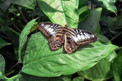 Ein Schmetterling auf Mainau