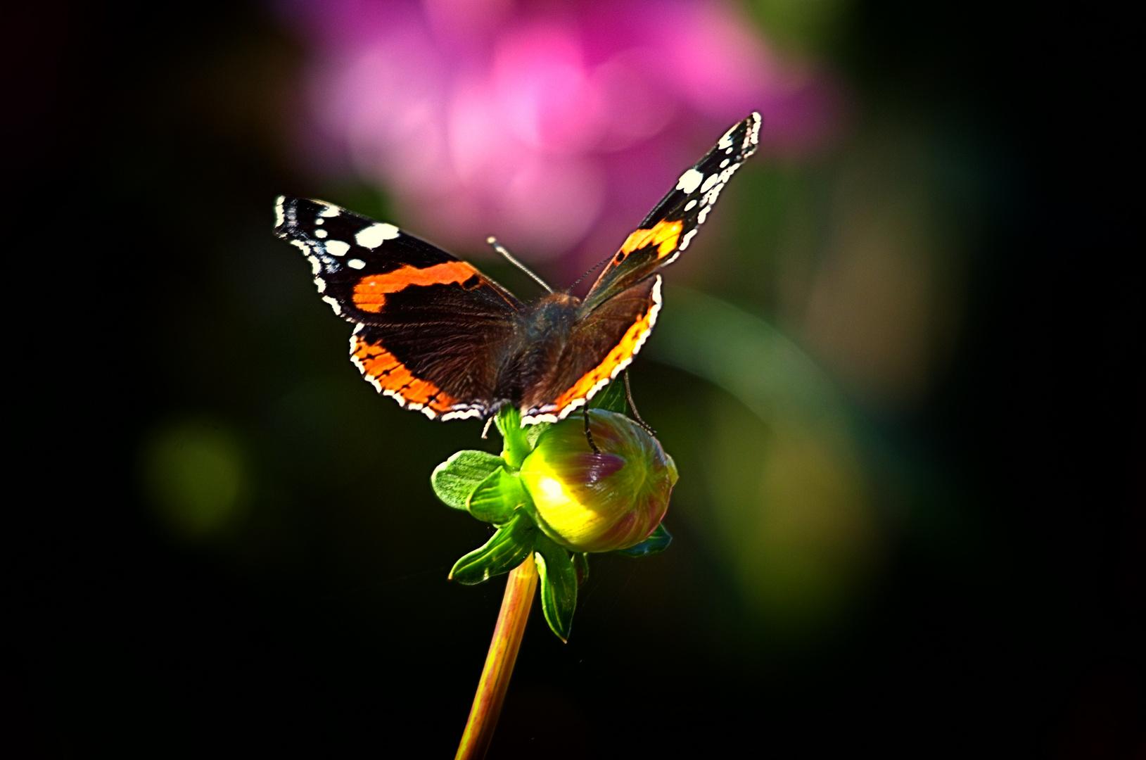 Ein Schmetterling.