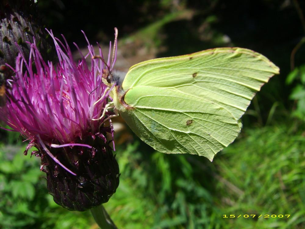 ein Schmetterling im Sommer