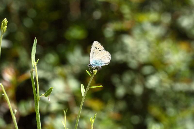 Ein Schmetterling in Croatien