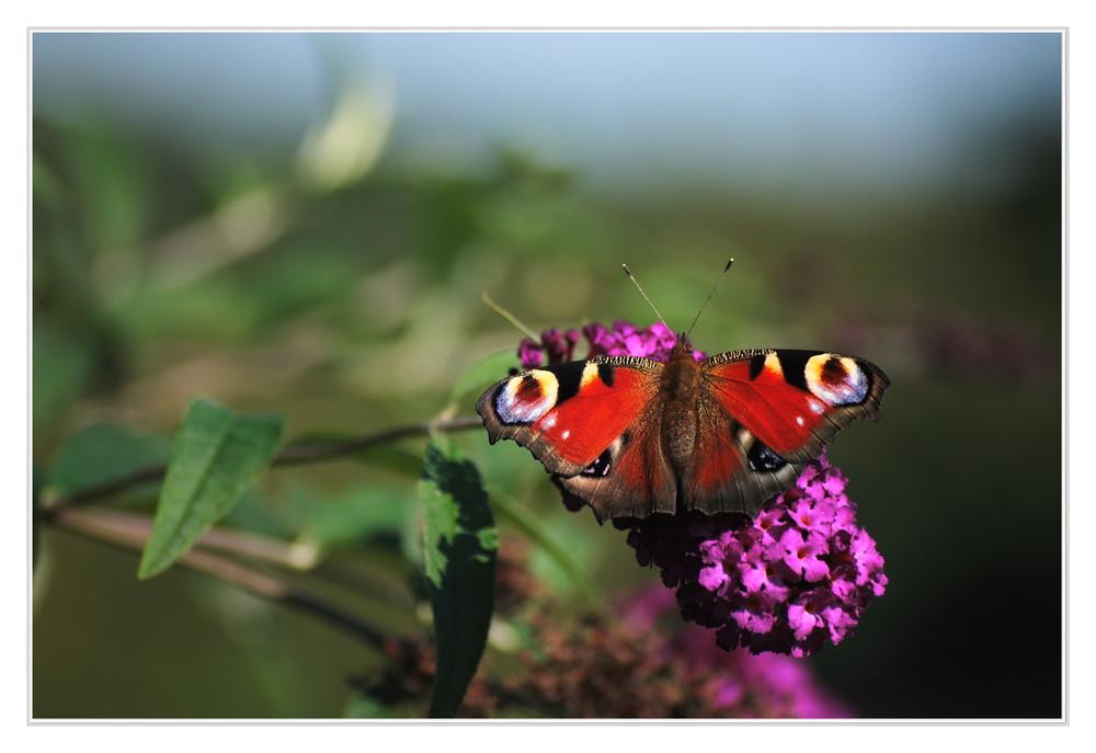 Ein Schmetterling kann einen Taifun auslösen....