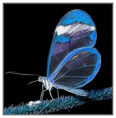 Ein Schmetterling mal anders