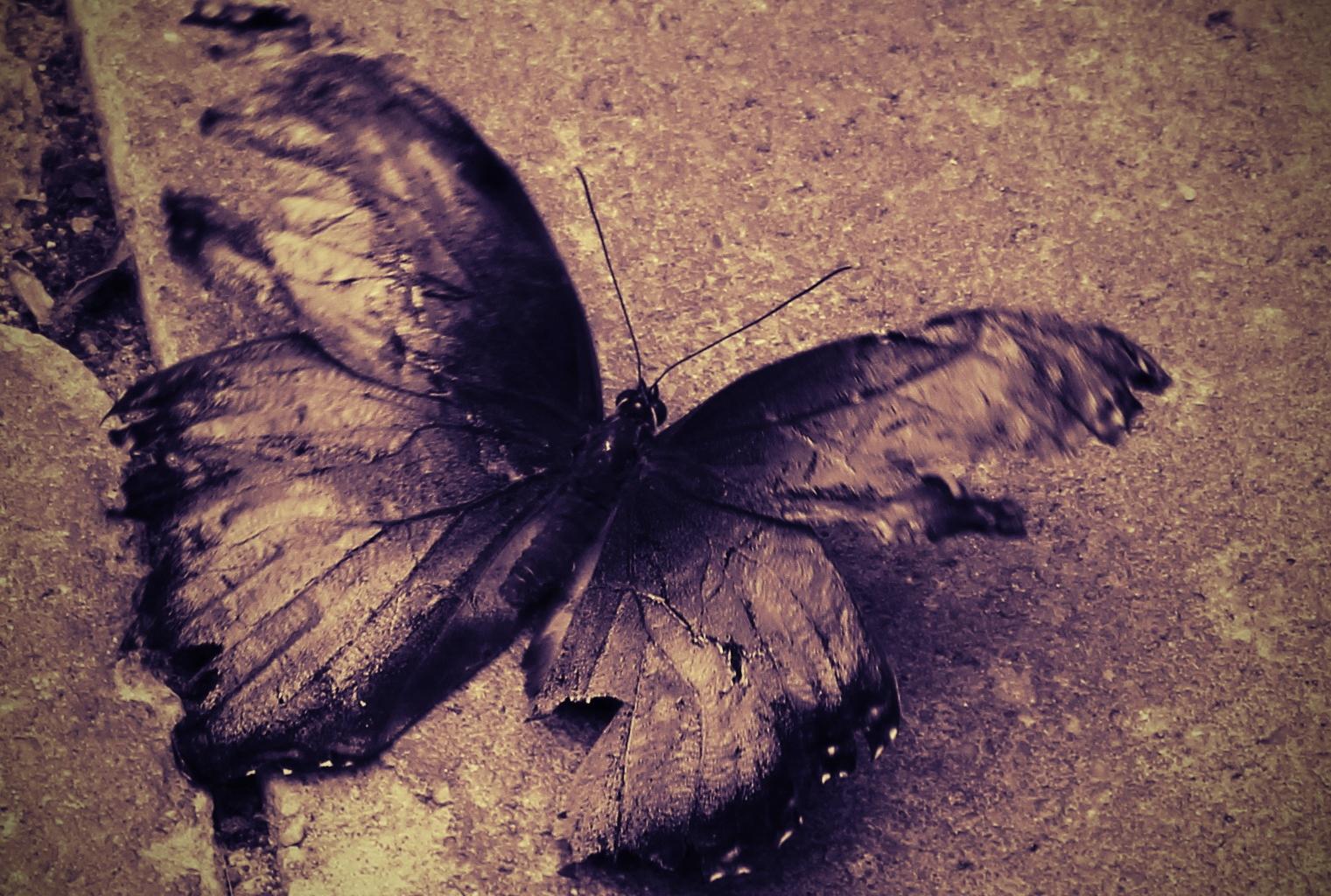 Ein Schmetterling mit Ecken und Kanten