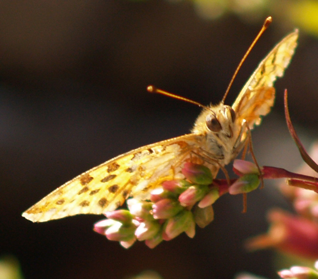 ein Schmetterlingslächeln für euch