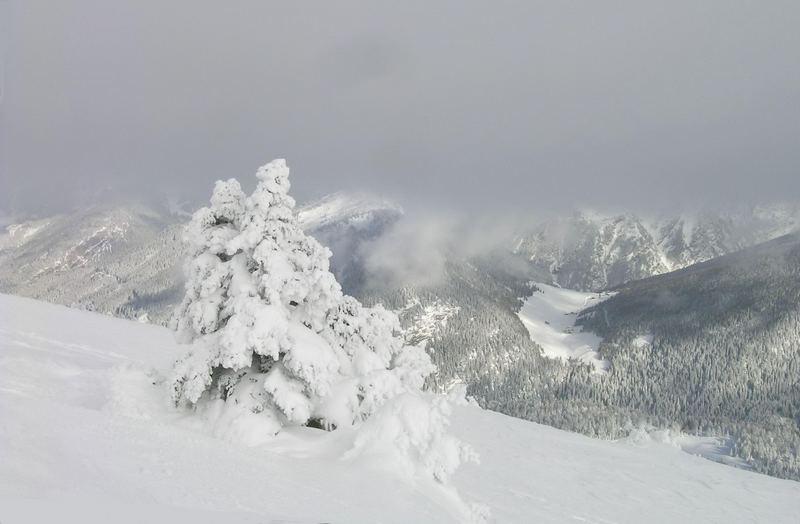 ein Schneebaum