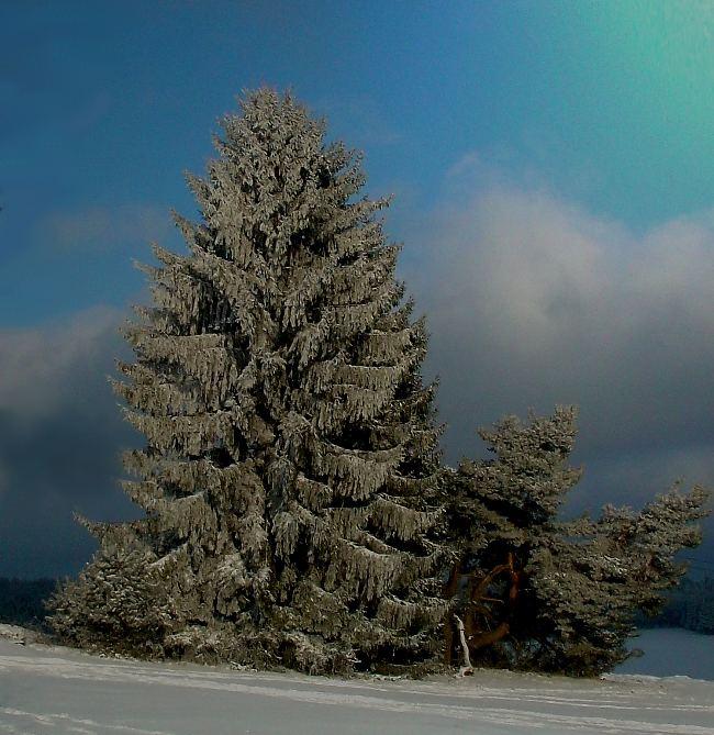 ein schöner Baum.....