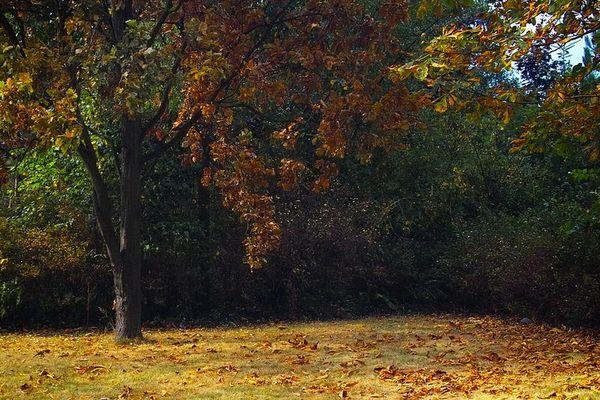 Ein schöner Herbsttag...