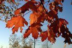 ein schöner Herbsttag geht zu Ende