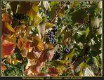Ein schöner Herbsttag V