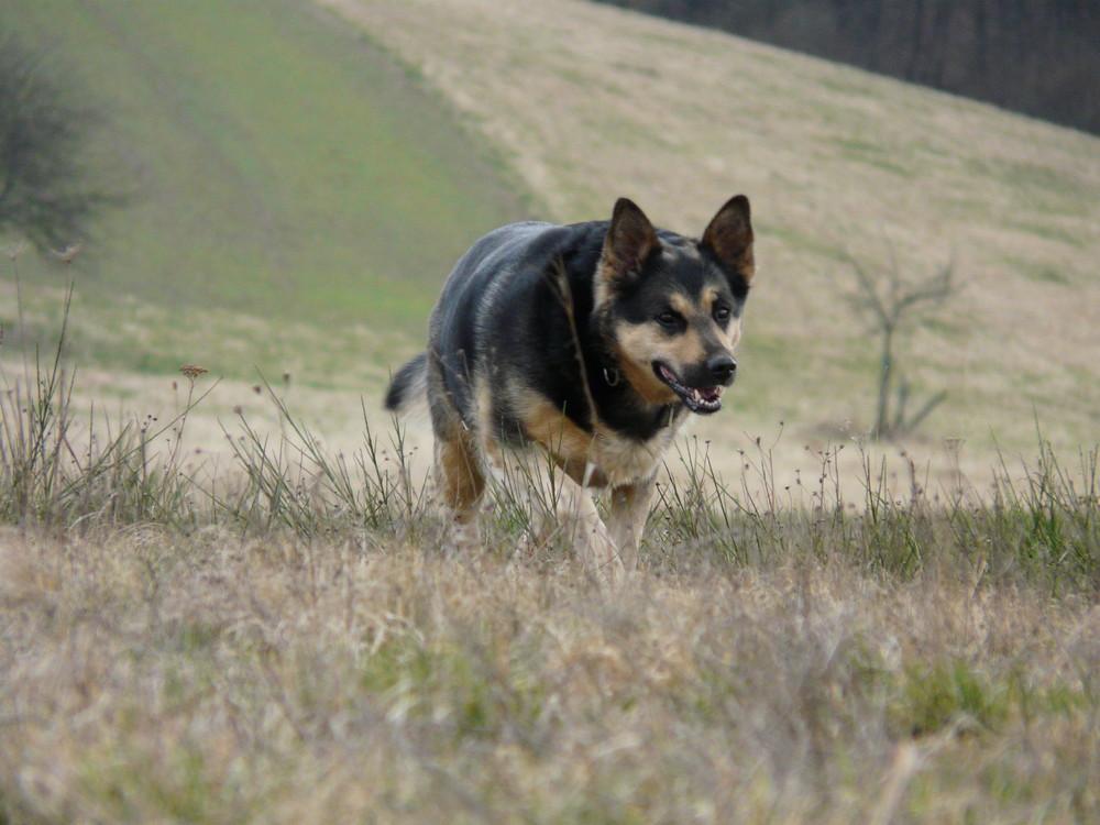 Ein schöner Hund