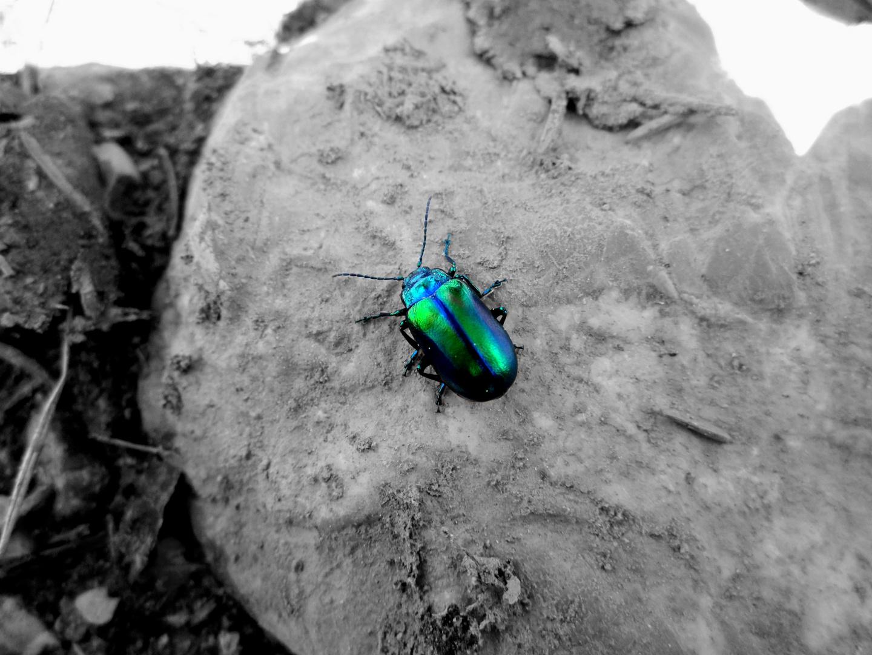 ein schöner käfer :)