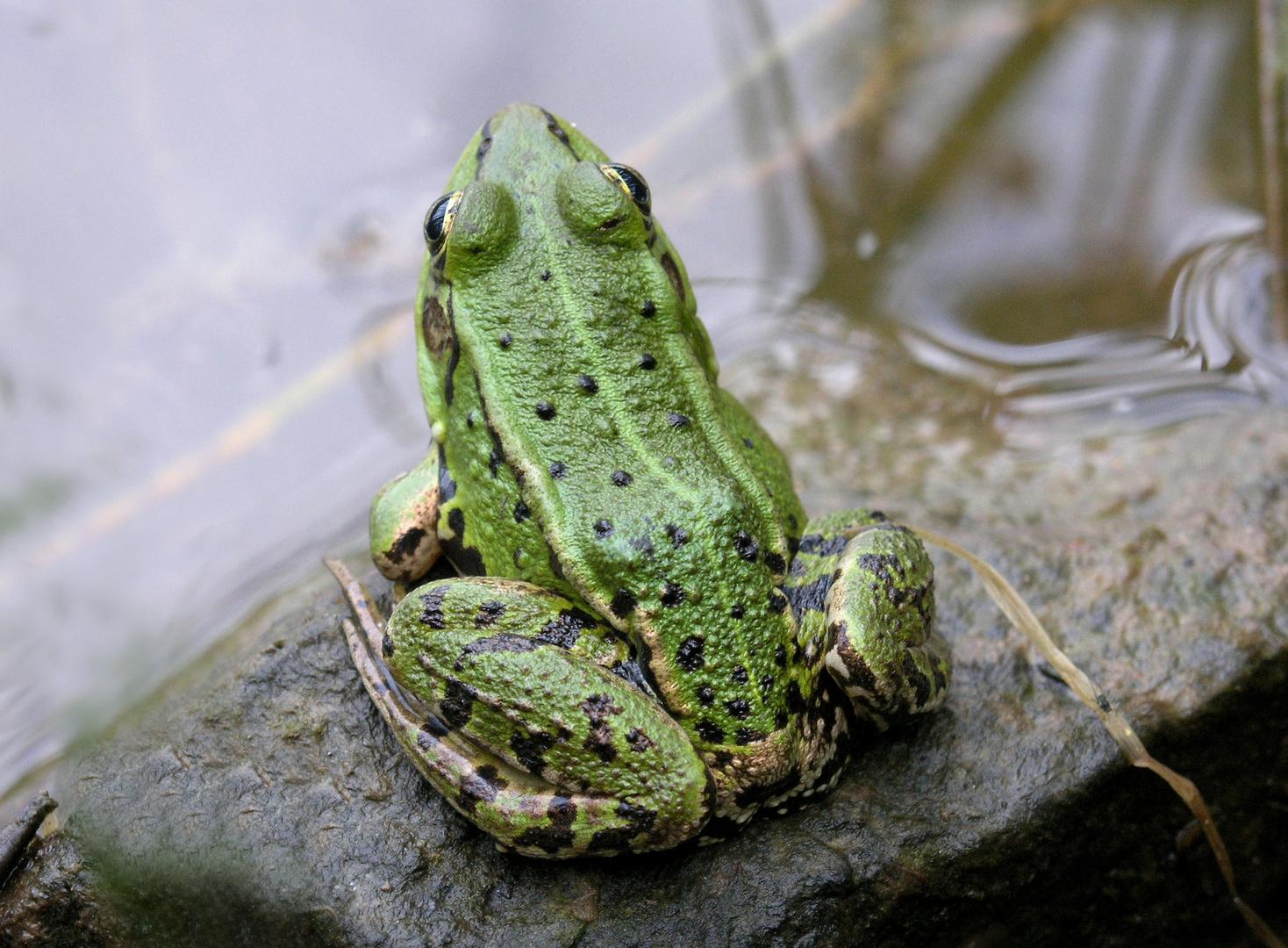 Ein schöner ... pardon grüner Rücken kann auch entzücken