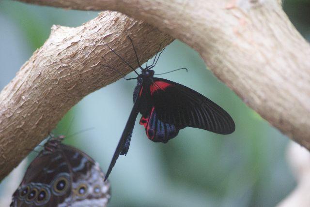 Ein schöner Schmetterling!