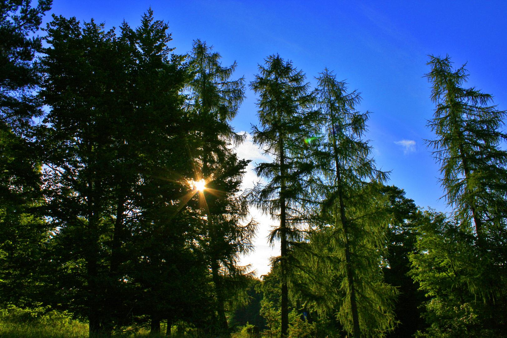 Ein schöner Sommermorgen beginnt