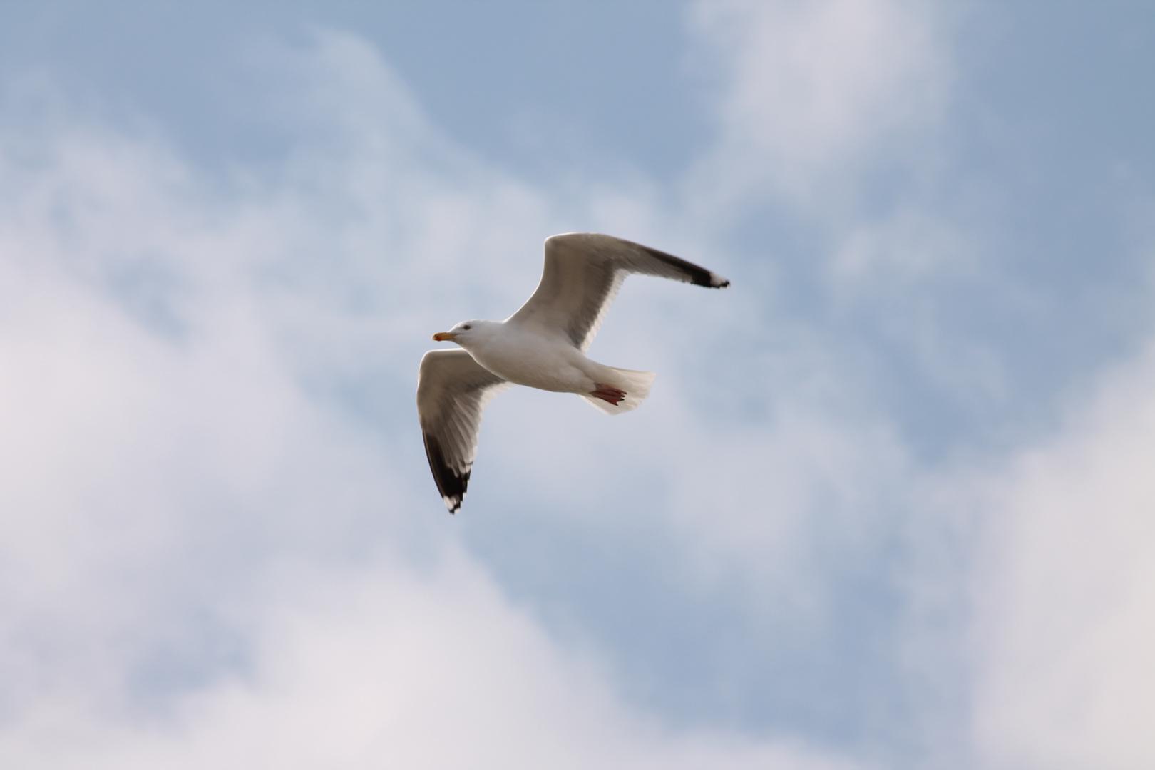 Ein schöner Tag zum fliegen...
