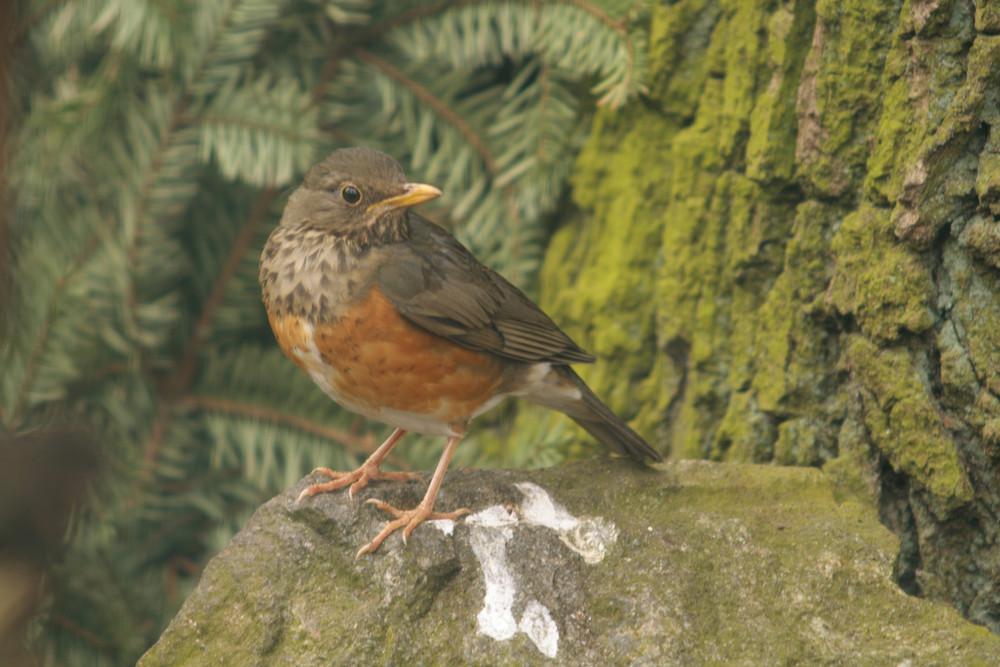 Ein schöner Vogel...2