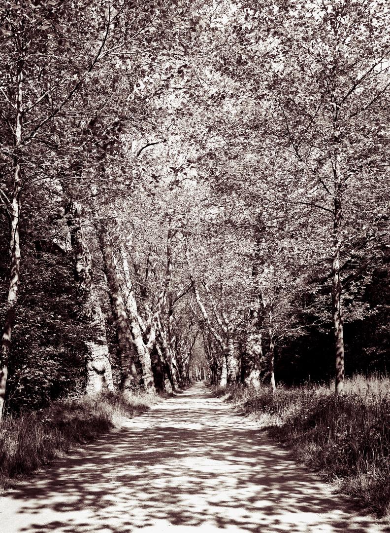 Ein schöner Weg
