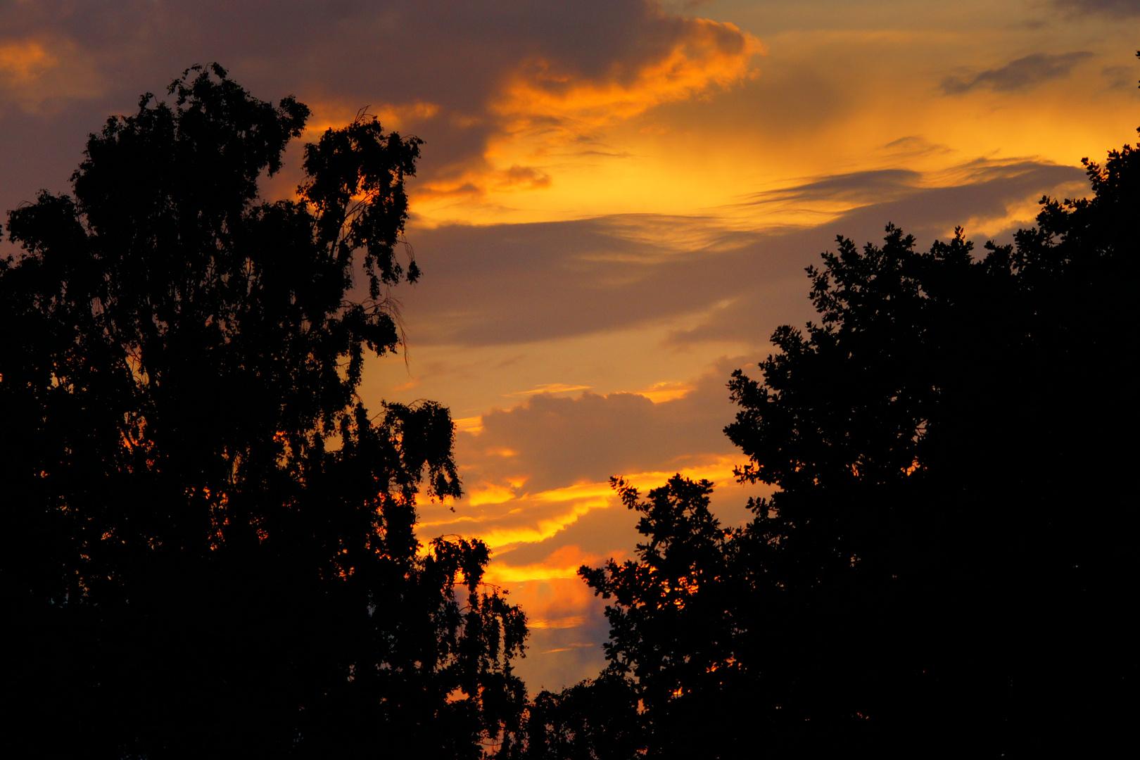 Ein schönes Abendsonnenlicht ,bescherte mir das Farbenspiel...