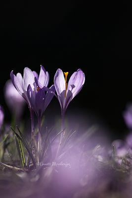 Ein schönes Frühlingswochenende!