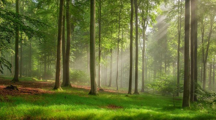 Ein schönes plätzchen, an dem man die Natur im Wald genießen sollte... ;-)
