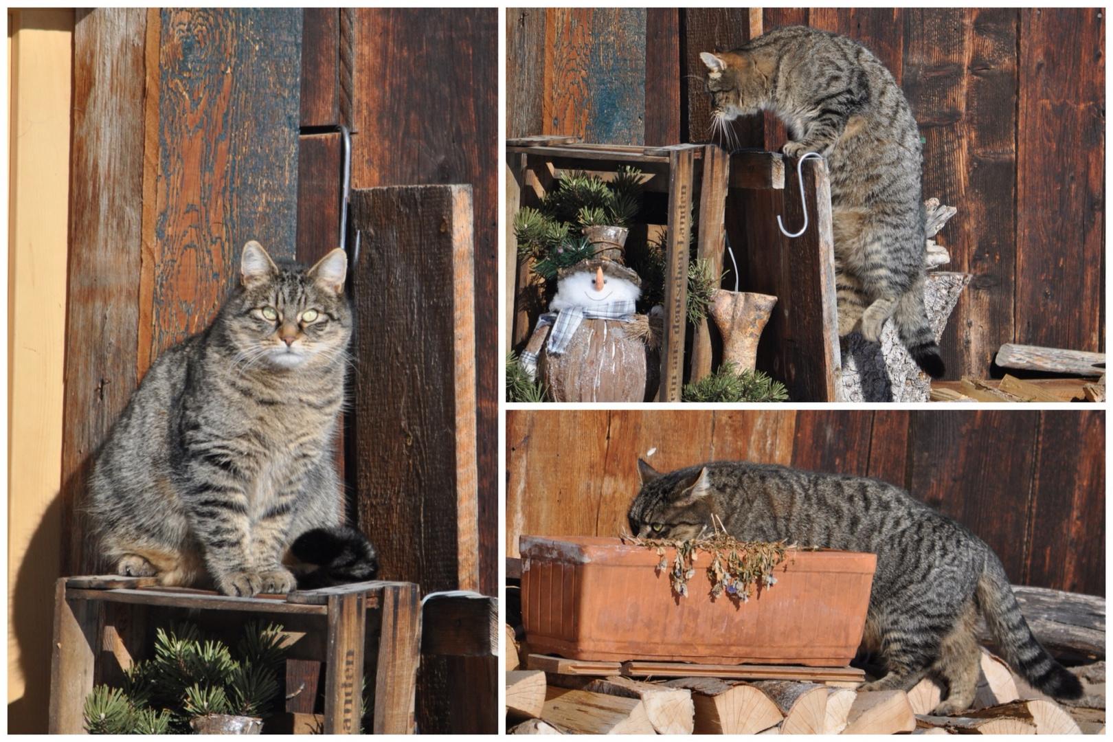 Ein schönes Plätzchen sucht sich's Kätzchen