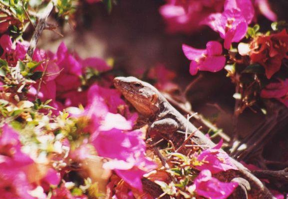 Ein schönes Reptil