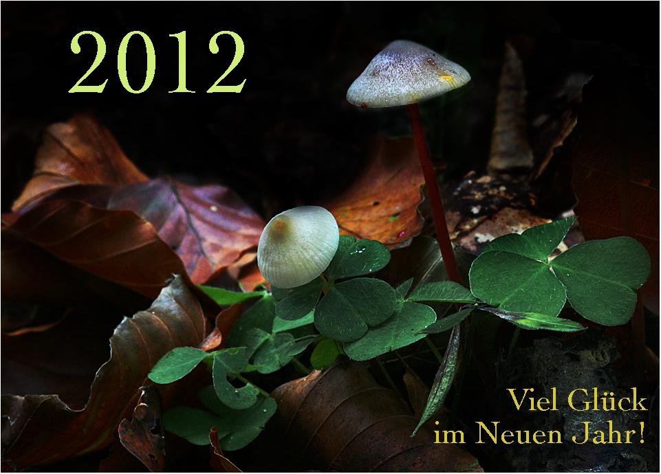 Ein schönes und gesundes Neues Jahr 2012 ...