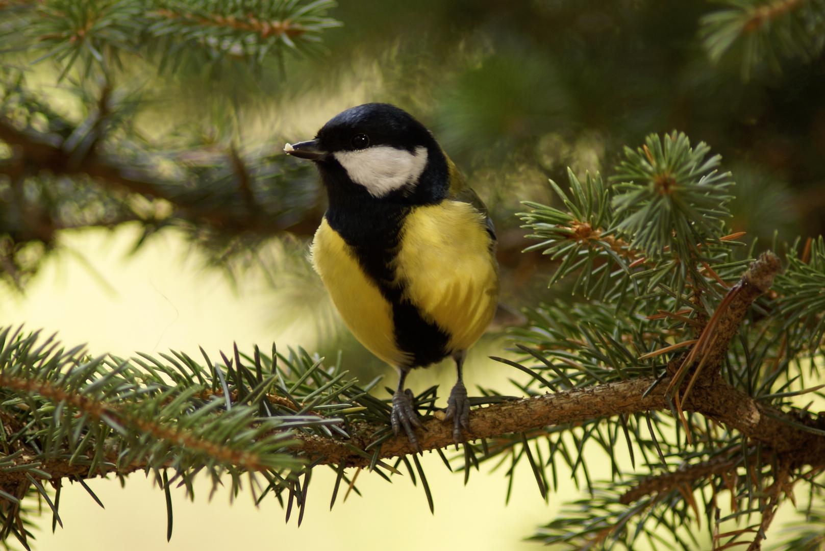 Ein schönes Vogelleben..............