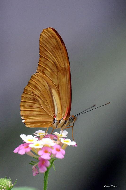 Ein Schönling auf der Blüte !