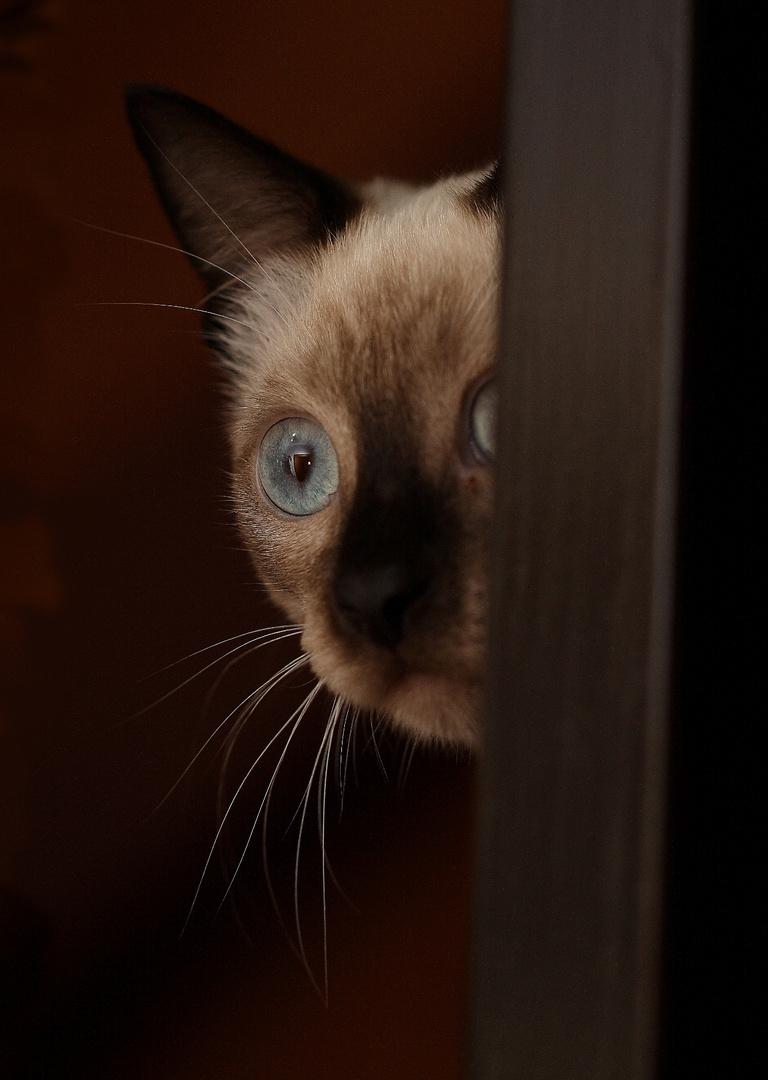Ein schüchterner Blick ...