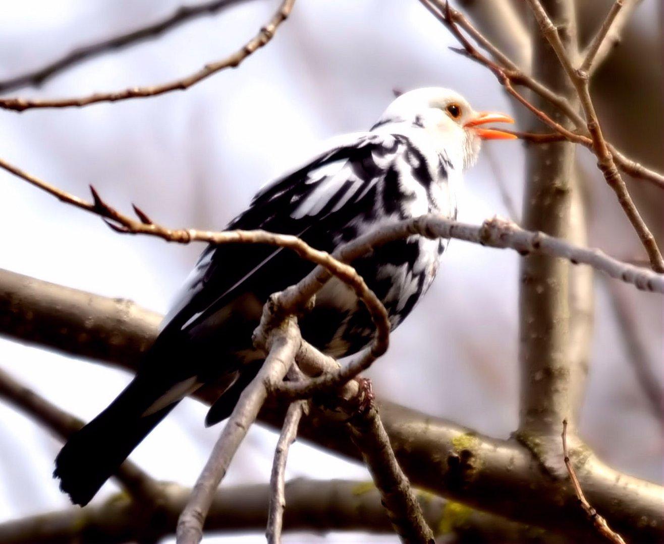 Ein....... schwarz-weißer Vogel