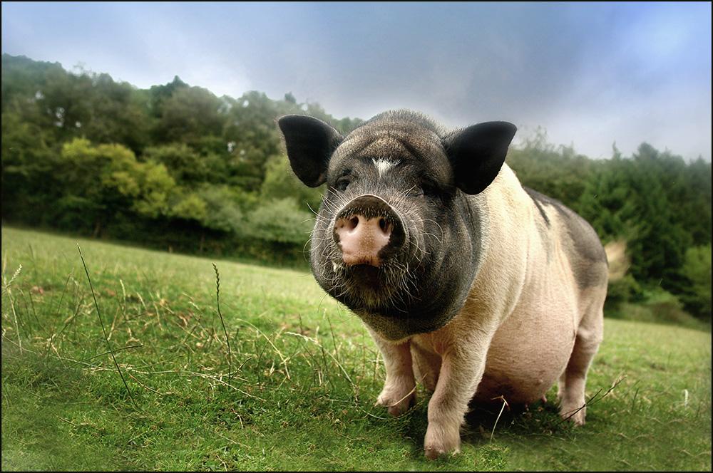 Ein Schwein !