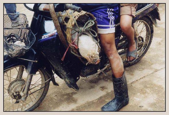 Ein Schwein auf Reisen
