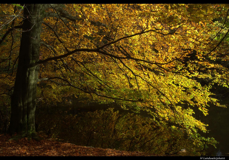 Ein See im Wald