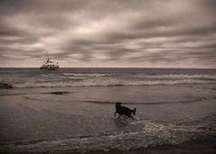 Ein Seehund (Meer in S/W)