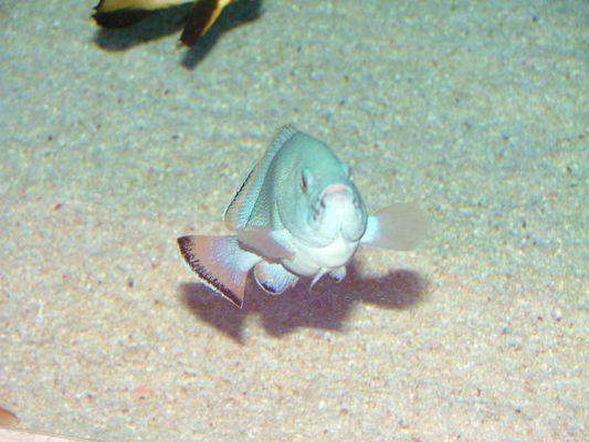 Ein sehr eitler Fisch...
