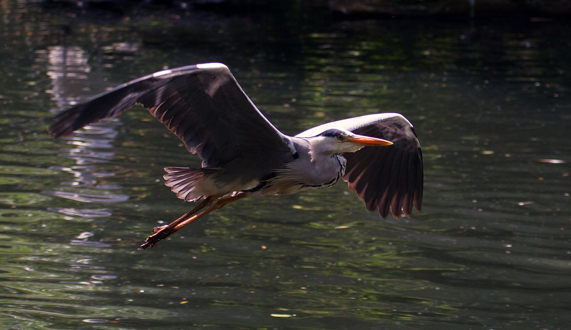 Ein sehr eleganter Flieger