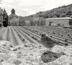 Ein sehr zahmer Zeitgenosse - Im Hintergrund Abbaye de Sénanque
