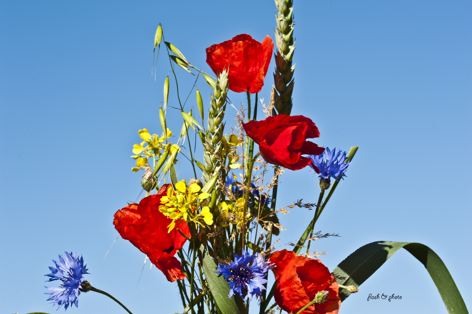 Ein selbstgepflückter Blumenstrauß in der Natur von der Insel Fehmarn
