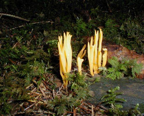 Ein seltsamer Pilz