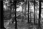 Ein Septembermorgen im Heseler Forst