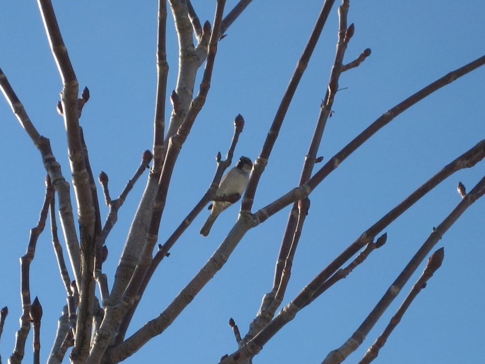 ein sich bräunender vogel